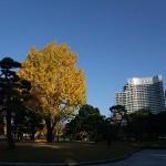 黄色に輝く銀杏と、パレスホテル(後方)