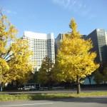 美しい銀杏の紅葉とパレスホテル