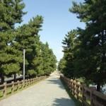美しい千本松原遊歩道