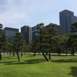 新緑輝く皇居外苑前広場